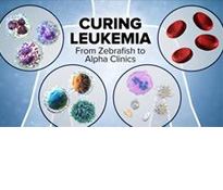 Curing Leukemia: From Zebrafish to Alpha Clinics