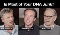 Is Most of your DNA Junk?